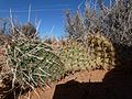 Prickly (6351275455).jpg