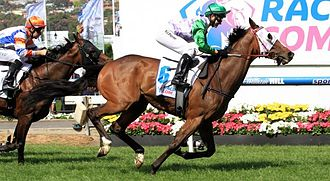Prince of Penzance - Prince of Penzance winning the 2014 Moonee Valley Gold Cup with Michelle Payne