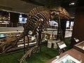 Probactrosaurus mount at IVPP.jpg