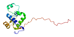 Protein WRN PDB 2axl.png