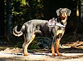 Proudest Dog In The World - panoramio.jpg