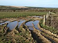 Puddles in field above Nethercott - geograph.org.uk - 741748.jpg