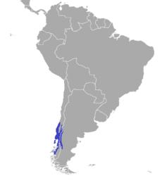 תפוצת הפודו הדרומי