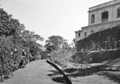 Queensland State Archives 1475 View of Government House rose garden flanked by bougainvillea and colourful shrubs 11 May 1950.png