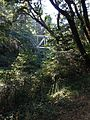 Rail bridge over San Lorenzo peeking through foliage.jpg