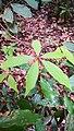 Rain forest 6.jpg