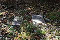 Raleigh Cemetery Memphis TN 2013-11-10 019.jpg