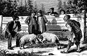 Ram fighting - Ram fight in Tbilisi, c. 1884