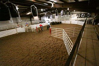 Ranch sorting - Ranch Sorting practice in Ponca City, Oklahoma
