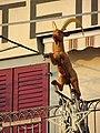 Rapperswil - Seequai 2011-12-02 15-43-35 (SX230).JPG