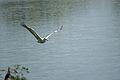 Reach the destination at Vedanthangal Bird Santuary.jpg