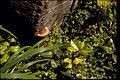 Redwood National Park REDW9375.jpg