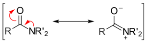 Nucleophilic acyl substitution - The two major resonance forms of an amide.