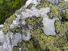 Lichenometry dating