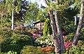 Rhodendon haven i en snæver vending - panoramio.jpg