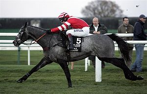 Richard Johnson (jockey) - Richard Johnson on Noble Request at the 2006 Fighting Fifth Hurdle