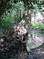 River Ching footpath 14, river bank tree, South Chingford, London, England.jpg