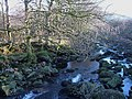 River Tavy at Standon Steps - geograph.org.uk - 300284.jpg