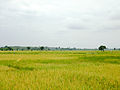 Rizières Mto Wa Mbu.jpg