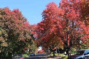 Deakin, Australian Capital Territory - Robe Street in autumn