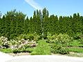Rose Garden (4426120591).jpg
