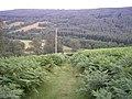 Rough Track - geograph.org.uk - 298410.jpg