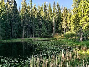 Round Lake State Park.jpg