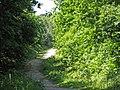 Route du Faîte (forêt de Montmorency) - panoramio - Eric Bajart.jpg