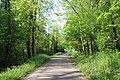 Route forestière de Fond d'Enfer1.jpg