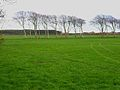 Row of birch trees - geograph.org.uk - 313184.jpg
