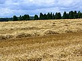 Rows of straw, Compton Down - geograph.org.uk - 1452118.jpg