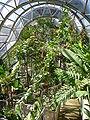 Royal Botanic Gardens, Sydney 03.JPG