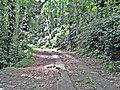 Rua - panoramio (21).jpg