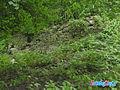 Ruiny zamku w Rudzie Slaskiej.jpg
