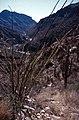 Saguaro National Park-10-Ocodillo-1980-gje.jpg