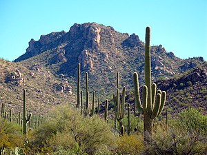 Saguaro National Park, Arizona, USA Français :...