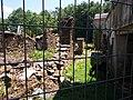 San Fiz de Rubián ruínas.jpg