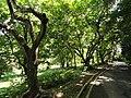 San Juan Botanical Garden - DSC07063.JPG