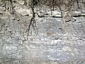 Sandstone-siltstone-shale (Vinton Member, Logan Formation, Lower Mississippian; Mohawk Dam roadcut, northwest of Nellie, Ohio, USA) 1 (32364982874).jpg