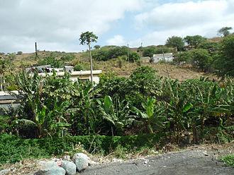 São Domingos, Cape Verde (municipality) - Plantations in São Domingos