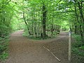 Saxon Shore Way and Greensand Way in Bourne Wood - geograph.org.uk - 1274512.jpg