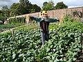 Scarecrow in the vegetable garden, Pollok Country Park - geograph.org.uk - 1711161.jpg