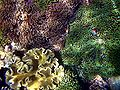 Sea anemones mad.JPG
