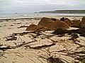 Seaweed at Sennen Cove - geograph.org.uk - 498432.jpg