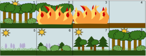 Secondary succession - Image: Secondary Succession