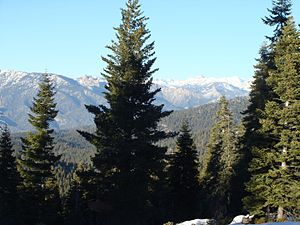United States National Forest - Sierra Nevada in the Sequoia National Forest, California.