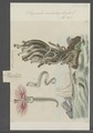 Serpula contortuplicata - - Print - Iconographia Zoologica - Special Collections University of Amsterdam - UBAINV0274 102 20 0013.tif