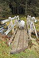 Sheep on footbridge - geograph.org.uk - 648776.jpg