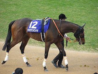 Shonan Pandora Japanese-bred Thoroughbred racehorse