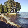 Shoreline at Gairloch Gardens.JPG